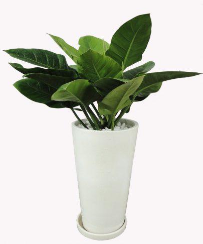 Những loại cây xanh trồng trong nhà đẹp và mang đến tài lộc