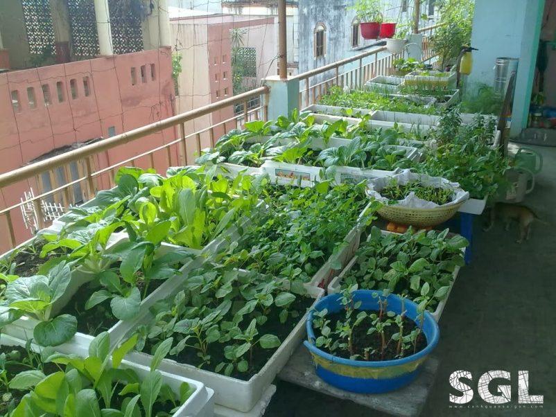 Tận dụng không gian trống để trồng rau