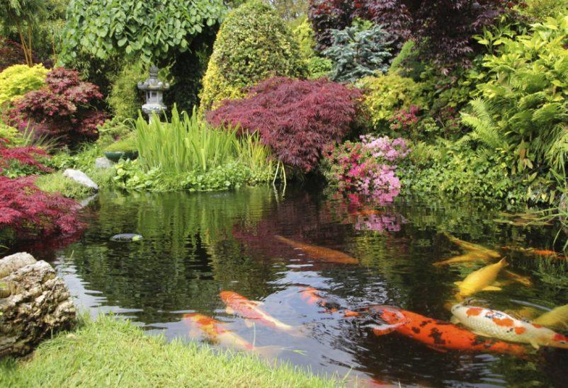 Để thể hiện hình ảnh sông ngòi, ao hồ từ thiên nhiên các nhà làm vườn Nhật Bản thường ưu tiên thể hiện bằng hình ảnh cáchồ cá Koi